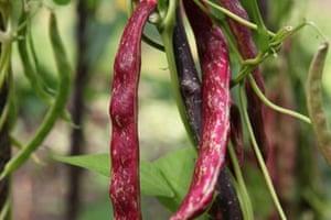 allotment-stir-beans