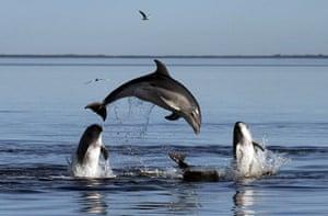 week in wildlife: New species of dolphins - Tursiops Australis