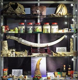 week in wildlife: MET Illegal Trade In Endangered Species Exhibition