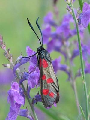 week in wildlife: Big Butterfly Count 2011
