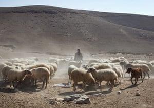Levene West Bank: Hajah herds her sheep near the village of Al Fakheet