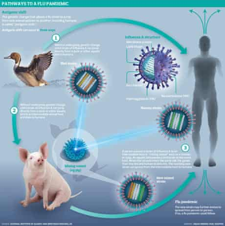 Flu pandemics graphic