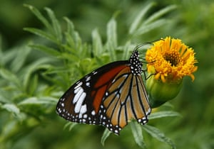 week in wildlife: A butterfly perches on a flower