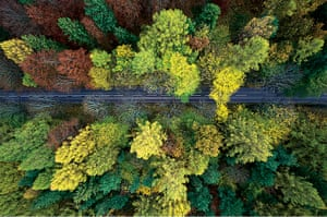 Forests from above: Forests from above