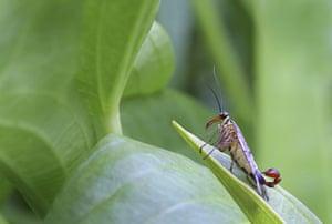 BWPA: Leslie Holburn : Scorpion Fly on a Leaf