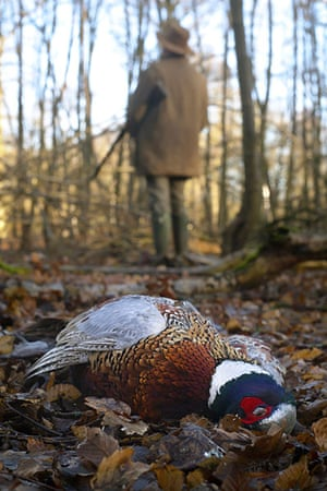 BWPA: Neil Aldridge : Common Pheasant