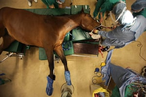 Picture Editors Guild: Surgeons Perform Treatment On Horses At The Newmarket Equine Hospital