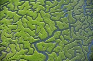 The Sea: Seaweed exposed at low tide in the coastal marshes of Bahía de Cádiz, Spain