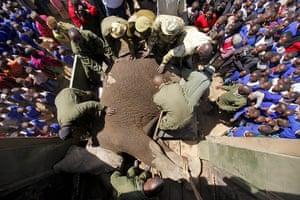 Week in wildlife: Elephant Relocation in Kenya