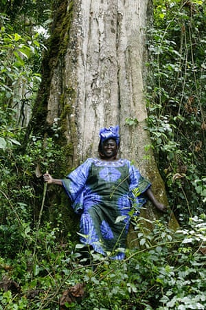 Wangari Maathai: a portrait of Wangari Maathai in Kiriti, Kenya, 2004