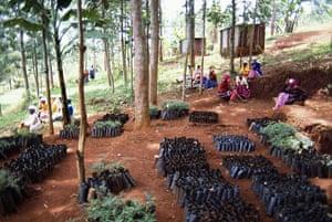 Wangari Maathai: Seedlings Waiting to be Planted
