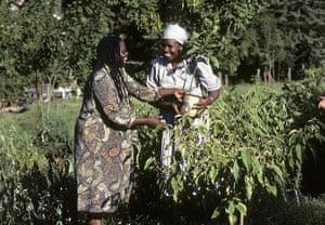 Wangari Maathai: Green Belt Movement