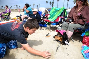 Surf City Surf Dog: A boy buries his dog in the sand at Huntington Beach
