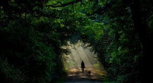 24 hours in pictures: Leipzig, Germany: A woman and her dog walk through a ray of sunlight