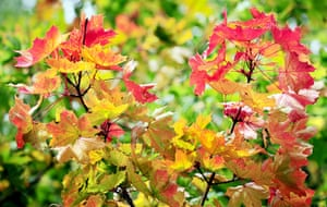 24 hours in pictures: Ashton Keynes, UK: Leaves beginning to turn to their autumn colours