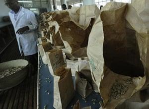Coffee in Kenya: A man sorts coffee beans