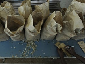 Coffee in Kenya: A worker sorts coffee beans according to quality at a factory