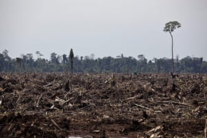week in wildlife: deforestation in areas where live endangered Sumatran tigers