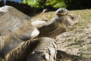week in wildlife: African spurred tortoise babies born in Nyiregyhaza Animal Park