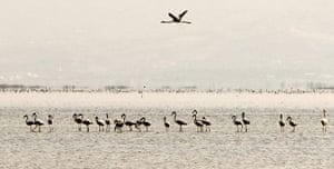week in wildlife: A view of Miyankaleh peninsula in Mazandaran Province