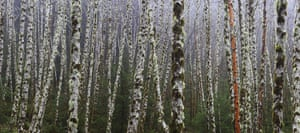 WPY 2011: In Praise of Plants and Fungi: The Grove by Bob Keller