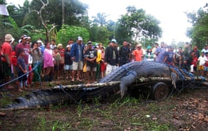giant crocodile captured: Residents look at a crocodile after it was caught in southern Philippines