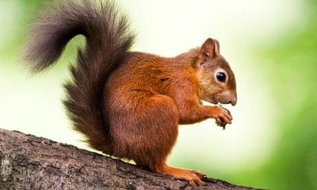 اختلالات تغذیه ای در سنجاب ها پوکی استخوان