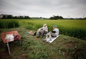 Fukushima: six months on: Fukushima: rice fields