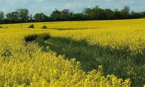 Rural north east Hertfordshire.