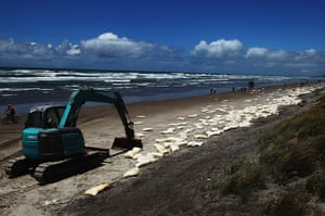 Rena breaks up: A digger waits to clean up bags of milk powder at Waihi Beach