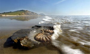 Ammonite fossil on Charmouth Beach in Dorset