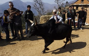 24 hours: Taruka, Nepal: An owner takes his bull for fight during a festival