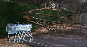 In pictures: contemporary: felled tree