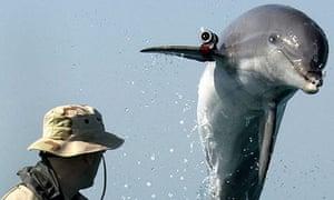 US Navy dolphin