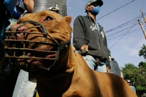 Pinheirinho favela: Residents stand behind barricades with a muzzled dog
