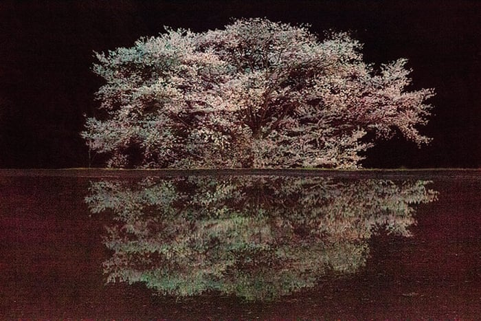 War blossoms into art: Ori Gersht at the Imperial War Museum