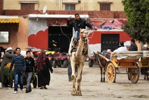 Cairo one year on : A young man rides a camel in the Sphinx village in Cairo