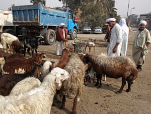 Cairo one year on : Men buy and sell goats in the City of the Dead area of Cairo