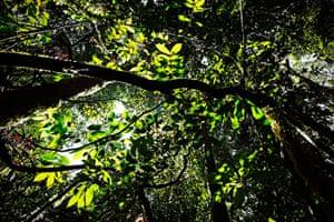 Big Trees: Rainforests of Sabah, Borneo