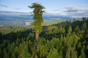 Big Trees: old growth redwood forest