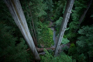 Big Trees: Giant redwood trees in Redwood National Park