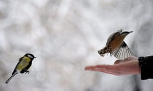 24 hours in pictures : Small birds are fed in a park in Sofia, Bulgaria