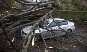 Gale force winds topple trees in Glasgow