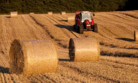 Making round bales of straw using a Massey Ferguson tractor.