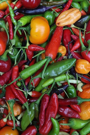 Harvest festival: A basket of chilies on display