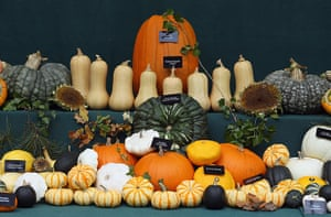 Harvest festival: A selection of pumpkins and squash