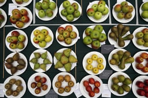 Harvest festival: A selection of fruit displayed on a judging bench