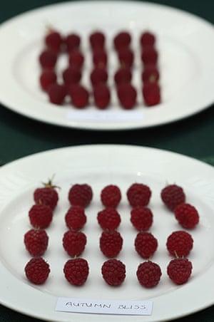 Harvest festival: Raspberries are displayed