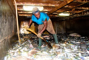 EJF: Illegal fishing in Sierra Leone