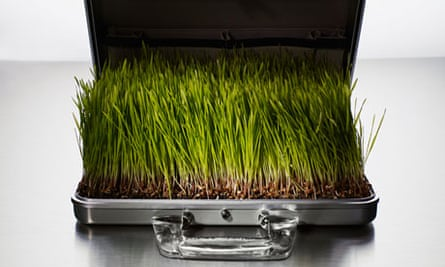Briefcase full of grass